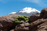 Rock plant and Andean mountain