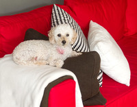 Dixie on Pillows